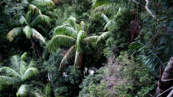 Skywalk, Mount Tamborine, Queensland, Australia