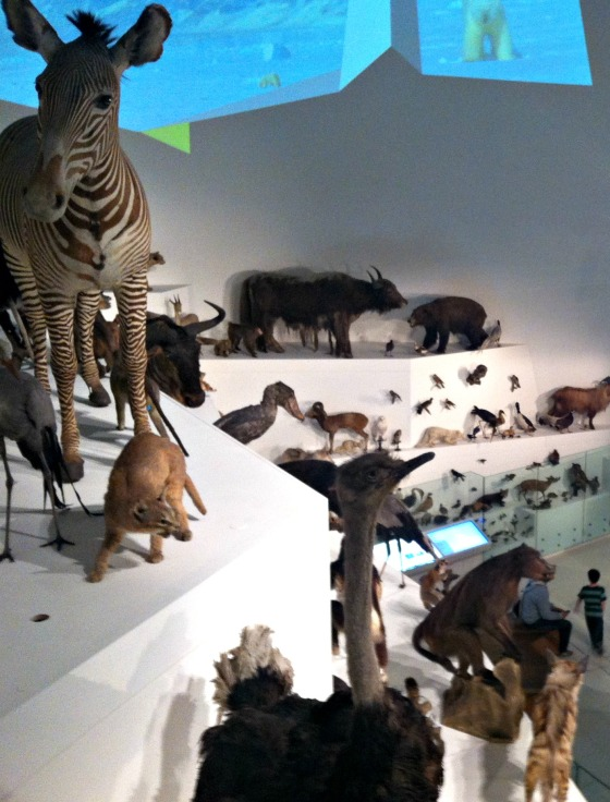 Melbourne Museum, Melbourne, Victoria, Australia